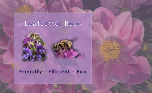 Gardeners will understand the benefits of pollinators and the value of leafcutter bees in their gardens.